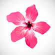 Hibiscus Tropical Flower Vector Art