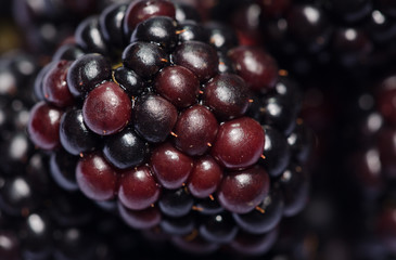More - Rubus ulmifolius