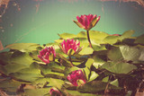 Pink waterlilies in pond .Vintage flowers card on old paper back