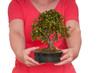 Zwei Hände halten einen Bonsai-Baum