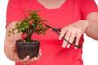 Frau schneidet einen Bonsai-Baum in Form