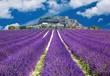 Leinwandbild Motiv Lavande en Provence, village provençal en France