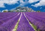 Lavande en Provence, village provençal en France