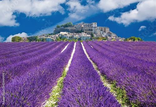 Lavande en Provence, village provençal en France © Alexi Tauzin