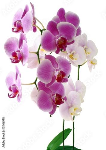 Fototapeten,orchidee,rosa,lila,blumenblatt