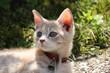 Chaton mignon dehors, animal chat
