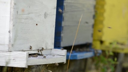 honey bee home in nature