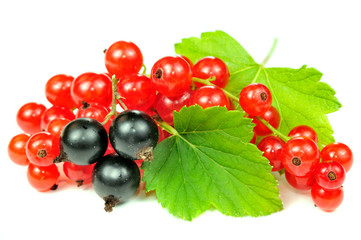 Red and Black Currants with Green Leaves Isolated on White