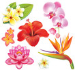 Set of tropical flowers