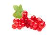 Rote Johannisbeeren mit Blatt auf weiß