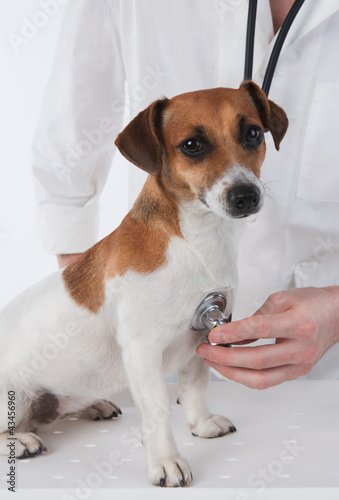 Veterinary. Dog is having medical examination