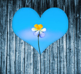 heart shaped window on a wooden door to a flower - 43458587