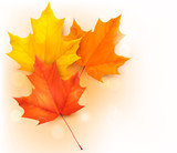 Fototapety Autumn background with leaves