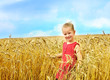Child in wheat field. .