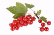 Johannisbeeren, red currants, isolated