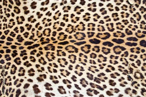 Tiger fur 01
