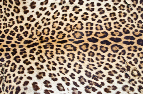 Poster Tiger fur 01