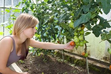 beautiful young girl growing tomatoes