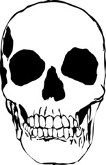 Plain Black and white illustration of a skull