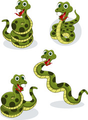snake collection