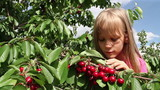 Girl tore off branches cherries
