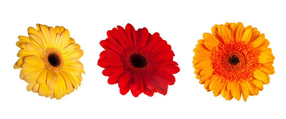 three daisy flowers. Isolated over white