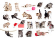 Funny British kittens collection isolated on white