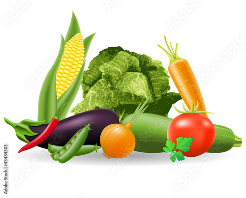 still life of vegetables illustration