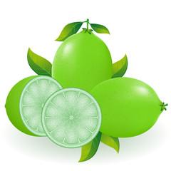 lime illustration