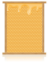 honey comb in the frame illustration