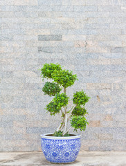 green tree with stone wall