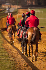 Racehorses walking back down the course
