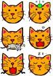 猫の表情いろいろ