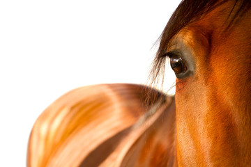 horse eye close up
