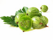 gooseberry with leaves