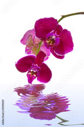 Fototapeten,orchidee,blume,blume,natur