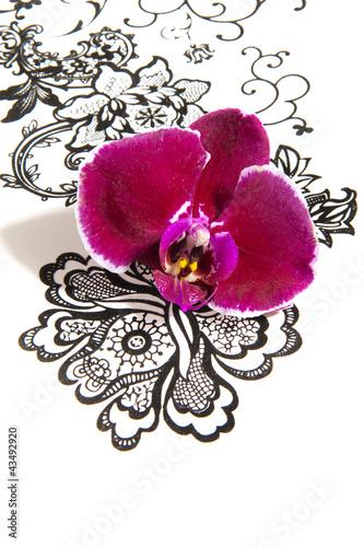 Fototapeten,orchidee,blume,ornament,textur