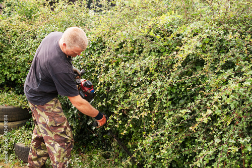Cutting hawthorn hedge