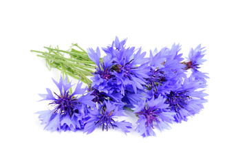 Bouquet of Blue Cornflowers Isolated on White Background