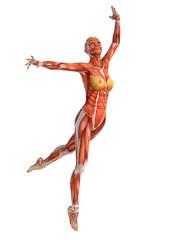 muscle woman ballet