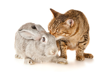 Gray rabbit and cat, isolated on white