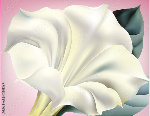 White trumpet flower with pink background