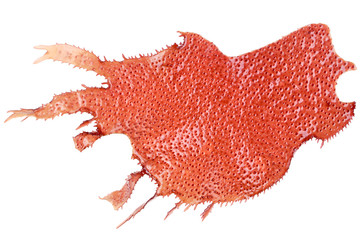 Red marine algae