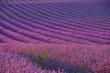 Fototapeten,lavendel,provence,frankreich,feld