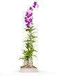 3D House Plant with Violet Flowers