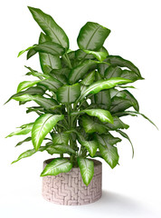 3d Tropical Houseplant in Stone Pot