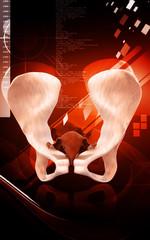 Pelvic girdle