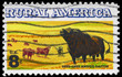 USA - CIRCA 1973 Cattle