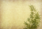 bamboo on old grunge paper texture background - 43511738