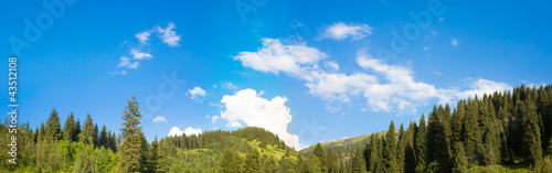 panorama of the nature of the fir and sky